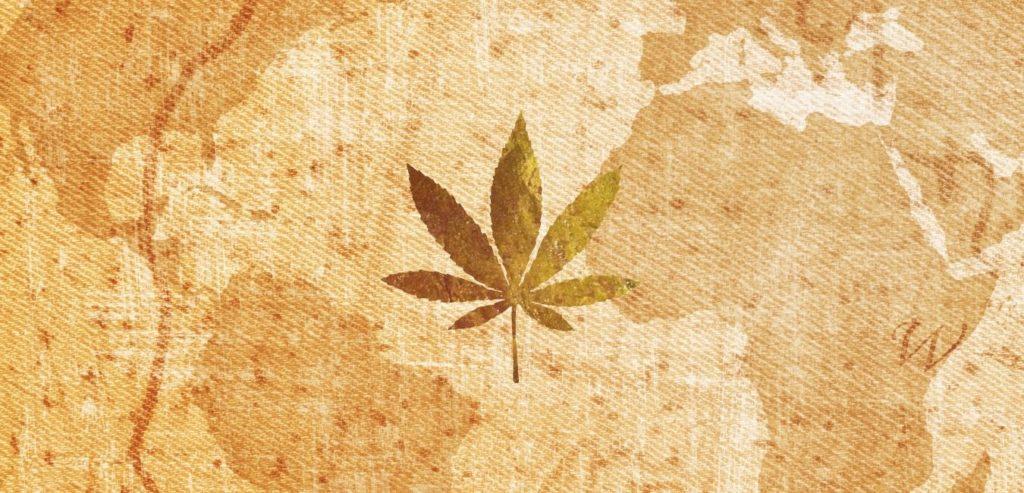 historia de la planta cannabis sativa l