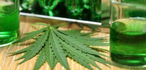 laboratorio cannabis (9)