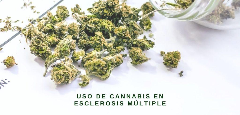 uso de cannabis en esclerosis multiple