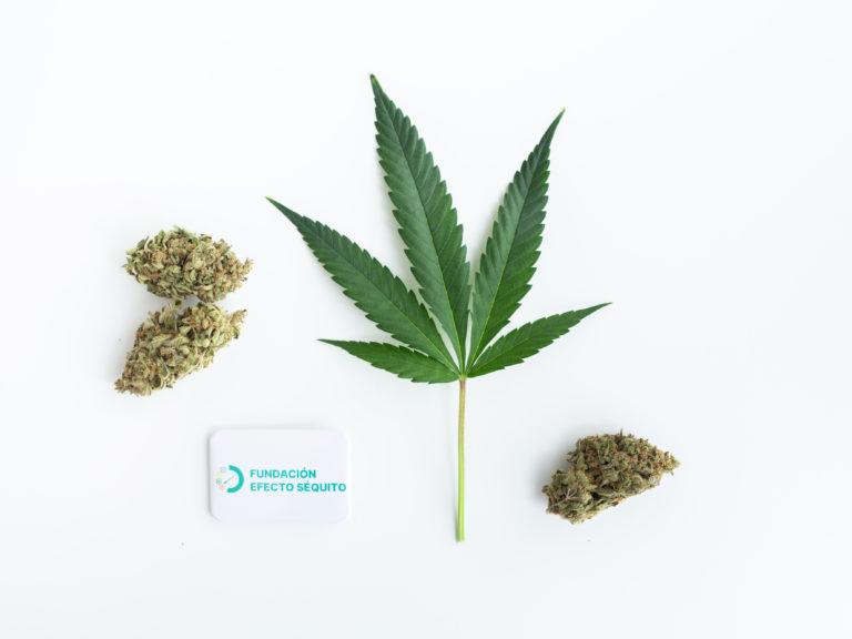 cursos de formacion cannabis medicinal