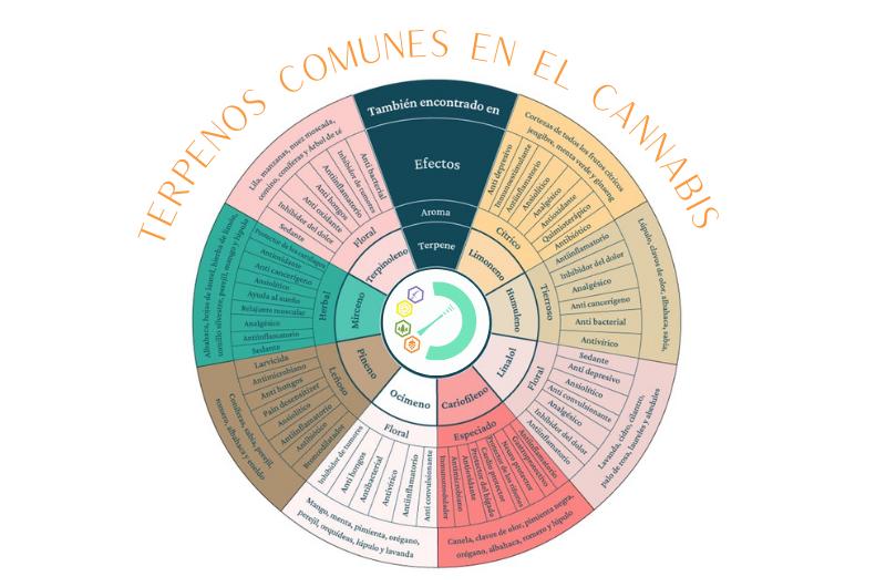 TERPENOS COMUNES EN EL CANNABIS