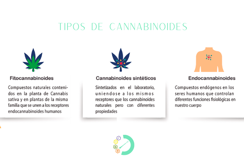 tipos de cannabinoides planta cannabis sativa l